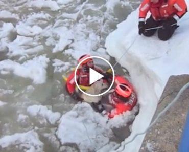 Guarda Costeira Percorre Vários Metros De Água Congelada Para Resgatar Cão 7