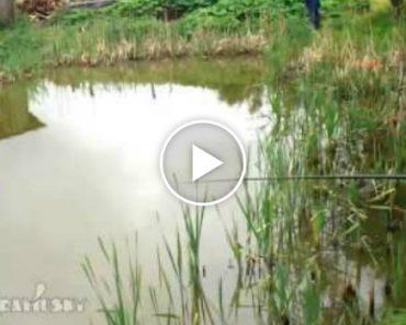 Pescador Não Sabia Que Estava a Ser Observado, Mas Quando Percebeu Foi Tarde Demais 7