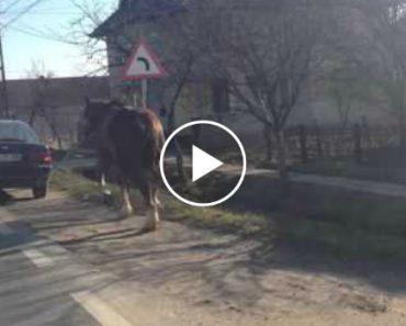 Dono Usa Método Alternativo Para Passear Cavalo 4