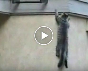 Gato Trepa Pela Fachada Do Edifício Para Entrar Em Casa 2