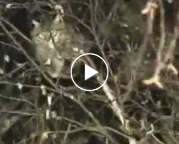 Como Um Soldado Russo Salva Um Gato Preso Numa Árvore 4