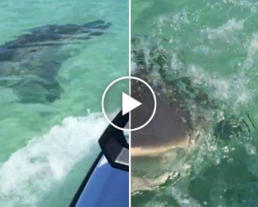 Tubarão Ataca Jet Ski Depois De Casal Se Ter Aproximado 3