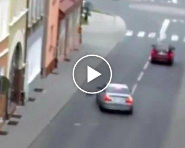 Condutor Tenta Atropelar Gato Propositadamente e Fica Sem Carta De Condução 3