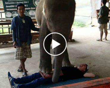 Elefantes Oferecem Massagens a Turistas 2