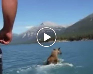 Bêbado Salta De Barco Para Cima De Alce 7