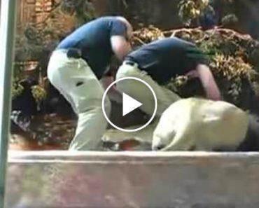 Leoa Salva Homem Do Ataque De Um Leão 3