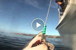 Pescadores Captam Imagem Impressionante Ao Serem Surpreendidos Por Tubarão Branco 9