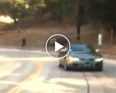 Condutor Doido Circula Em Marcha Atrás Numa Estrada Movimentada Durante Vários Quilómetros 3