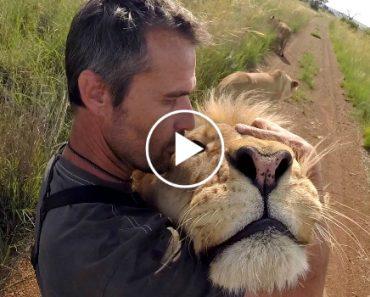 Encantador De Leões, é Assim Que Este Homem é Conhecido Devido à Relação Com Os Felinos 1