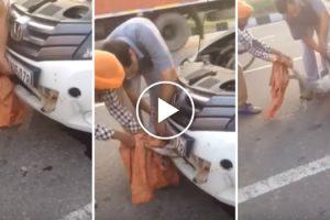 Cão Resgatado Depois De Ficar Preso No Interior De Um Carro 10