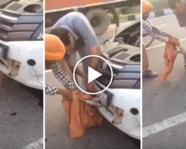 Cão Resgatado Depois De Ficar Preso No Interior De Um Carro 7