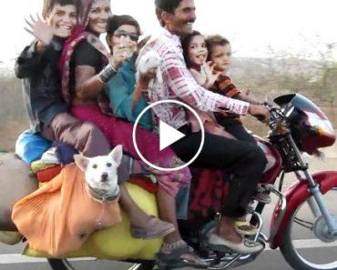 Um Transporte Para a Família Inteira!!! 3