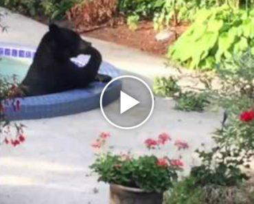 Casal Encontra Urso a Tomar Banho No Seu Jacuzzi 8