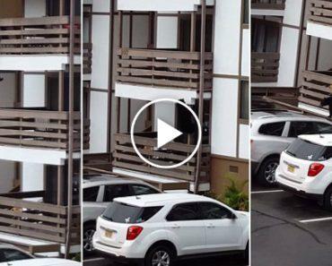 Urso Sobe Pela Fachada De Condomínio Para Entrar Em Apartamentos 3
