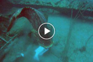 Mergulhador Fica Furioso Por Garoupa Roubar Todos Os Seus Peixes 9