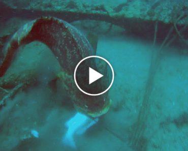 Mergulhador Fica Furioso Por Garoupa Roubar Todos Os Seus Peixes 7