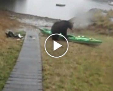 Urso Destrói Caiaque De Mulher Mesmo Depois De Ela Usar Spray De Gás Pimenta 8
