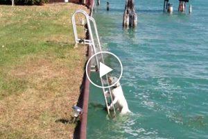 Cão Usa As Escadas Para Sair Da Água 10