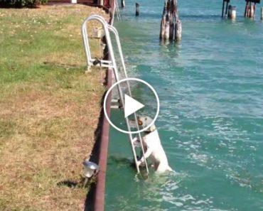 Cão Usa As Escadas Para Sair Da Água 8