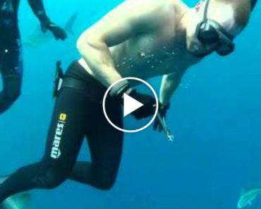 Mergulhadores Aproximam-se De Enorme Tubarão e Retiram Anzol Preso Na Boca 3