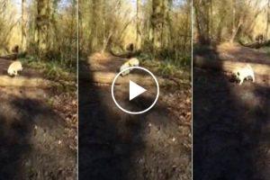 Dois Cães Conseguem Saltar Por Cima Do Tronco, Mas Veja Como Fez o 2º Cão 8