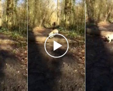 Dois Cães Conseguem Saltar Por Cima Do Tronco, Mas Veja Como Fez o 2º Cão 6