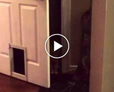 Veja Como Este Gato Entra Em Casa 3