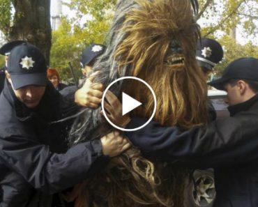 """""""Chewbacca"""", Da Guerra Das Estrelas, Preso Por Conduzir Sem Documentos 8"""