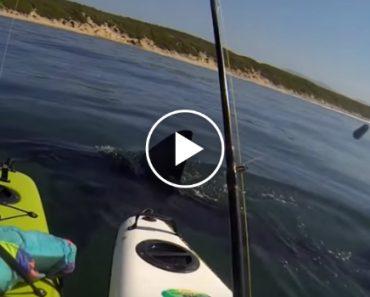Tubarão Cerca e Atemoriza Praticantes De Caiaque 4