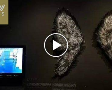 2 Crianças Partem Delicada Obra De Arte De Vidro Enquanto Adultos Assistem e Filmam Momento 9