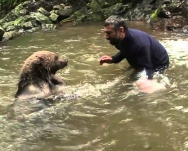 Homem Corajoso Abraça e Beija Urso 1