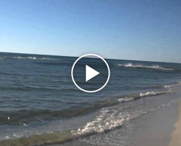 Banhista Filma Momento Em Que Dezenas De Frenéticos Tubarões Invadem Praia Para Se Alimentarem 8