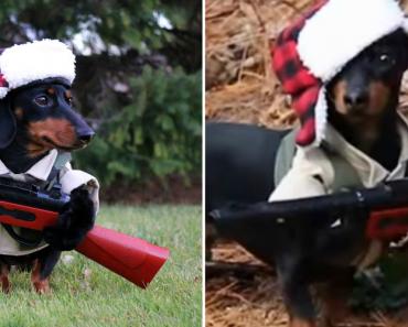 """Cão """"Caçador"""" Apresenta-se Ao Serviço 3"""