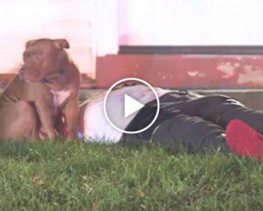 Pit Bull Mantém-se Ao Lado Do Seu Dono Ferido Após Incêndio Em Casa 1