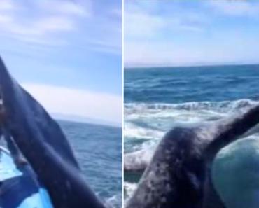 Estava a Ser Um Momento Mágico Ao Ver Uma Baleia De Tão Perto, Até Levar Uma Bofetada 6