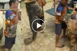 Peixe Monstruoso Pescado No Brasil 10
