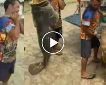 Peixe Monstruoso Pescado No Brasil 7