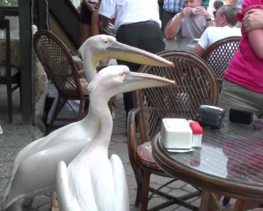Por Causa Destes Pelicanos, Ela Nunca Mais Irá Voltar à Turquia 5