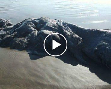 Misteriosa Criatura De 4 Metros De Comprimento Surge Em Praia Mexicana e Intriga Especialistas 5
