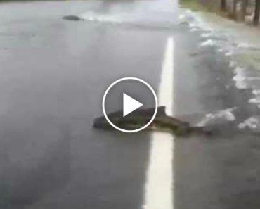 Salmão Atravessa Estrada Inundada!!! 5