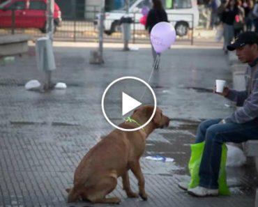 O Dia Em Que Alguém Aproximou Os Cães Abandonados Das Pessoas Que Passam Por Eles Na Rua 4