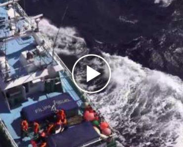 Força Aérea Resgata Pescador Mordido Por Tubarão-Azul Ao Largo Da Costa Portuguesa 1