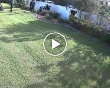 """Polícias Australianos Mostram Como Se """"Salta"""" Uma Cerca Para Apanhar Criminosos 2"""