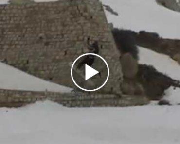 Praticante De Snowkite Apanha Enorme Susto Ao Ser Puxado Por Rajada De Vento Forte 8
