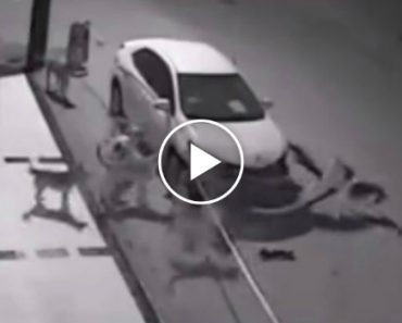 """""""Gangue"""" De Cães Ataca e Destrói Carro Estacionado Na Rua 9"""
