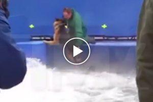 """Imagens Da Gravação Do Filme """"A Dog's Purpose"""" Mostram Cão Aterrorizado a Ser Forçado a Fazer Cena 10"""