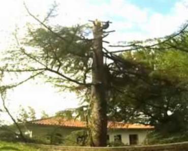 Corte De Árvore Termina Com Queda De 2 Madeireiros 7