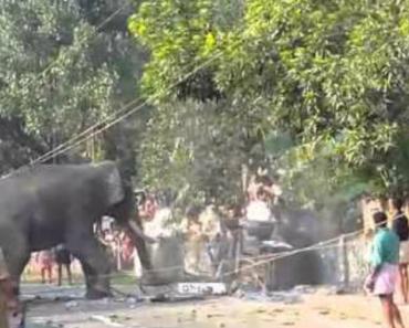 Elefante Enraivecido Destrói Rua e Assusta População 4