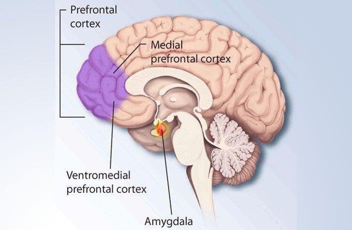 Estudo Encontra Ligação Entre Fundamentalismo Religioso e Dano Cerebral 2