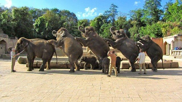 Reportagem Revela Tortura De Elefantes Bebés Em Zoo Na Alemanha 1